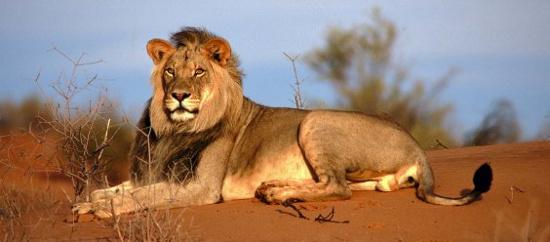 Khám phá thiên nhiên hoang dã vùng đất Kenya