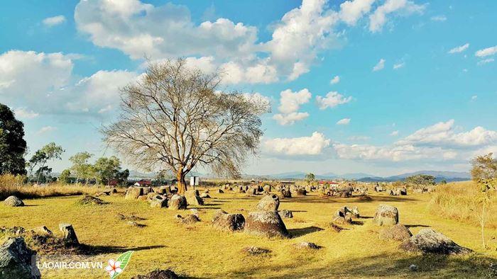 Vẻ đẹp cánh đồng chum ở Lào
